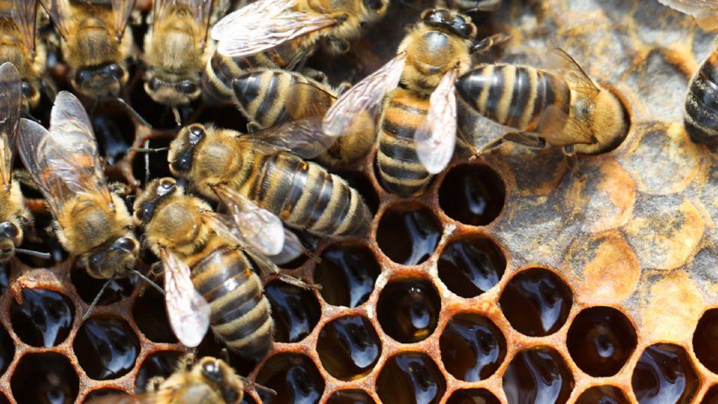 Apivita, la sociedad de las abejas