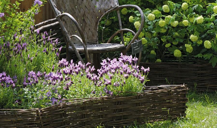 Planta de exterior resistente al sol lavanda