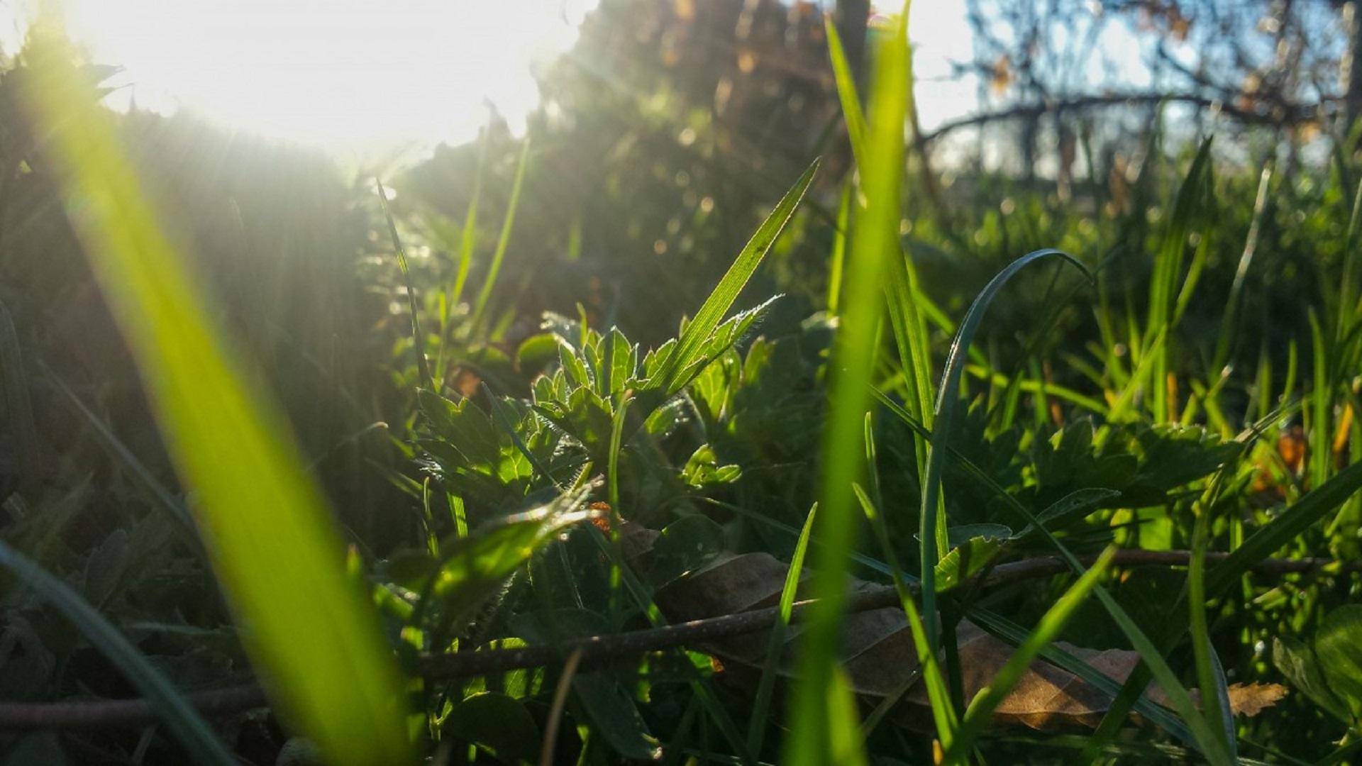 Plantas de exterior resistentes al sol