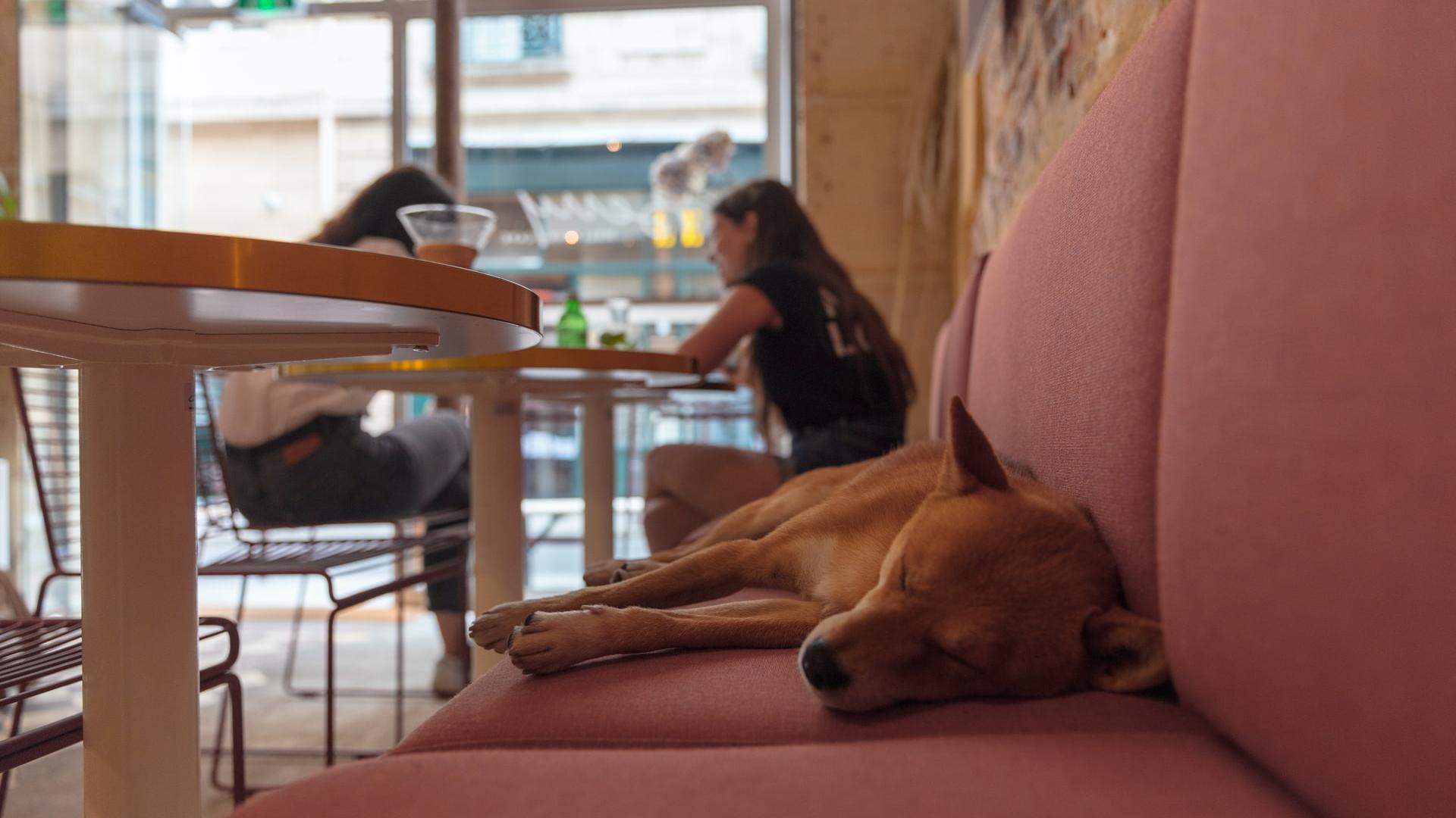 Restaurantes que permiten mascotas