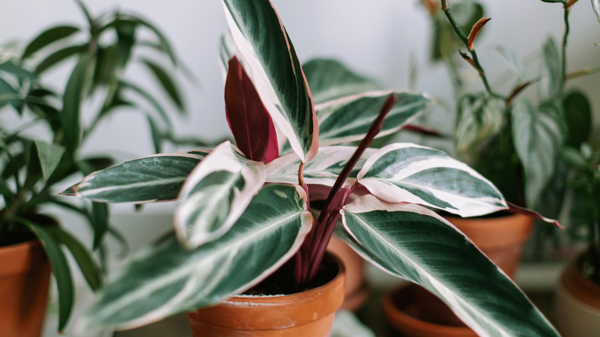 Imagen destacada artículo plantas