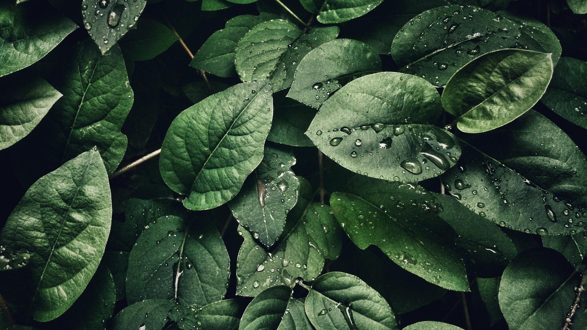 Yute Natural, compromiso y protección del medioambiente