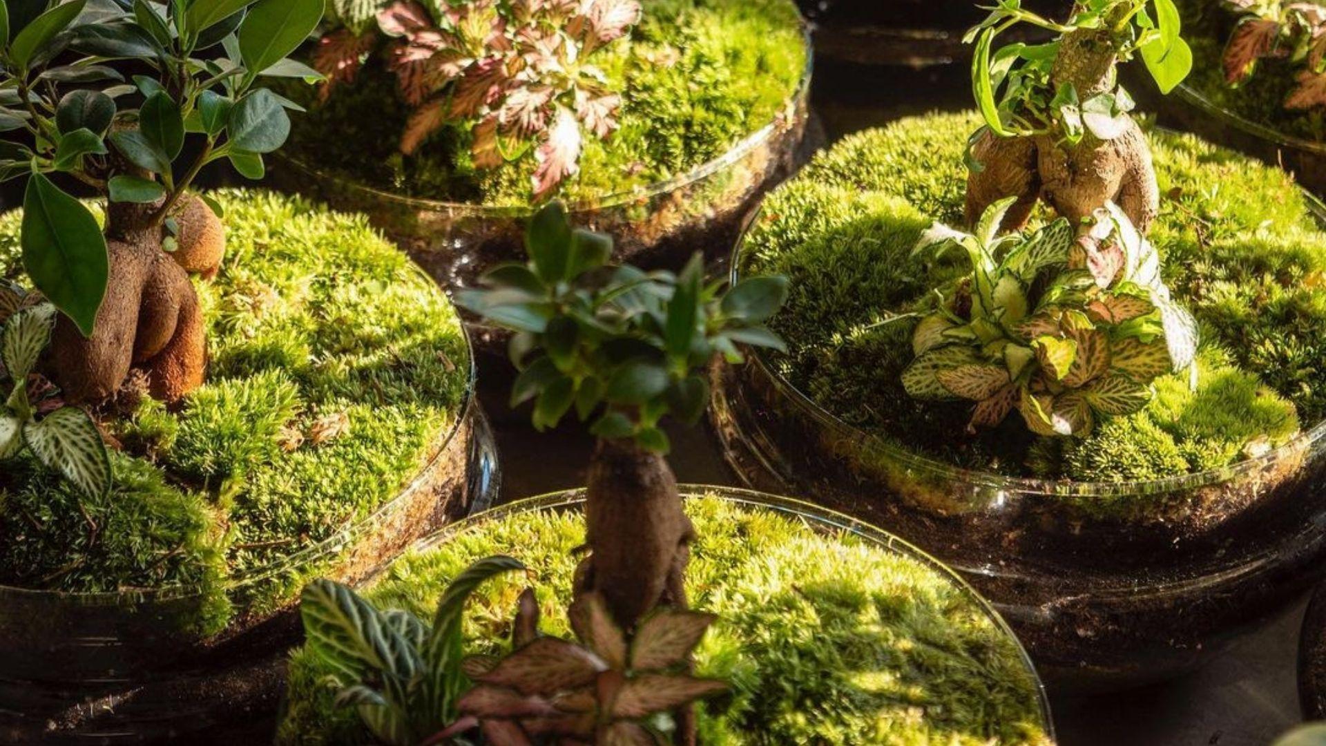 plantas con musgo
